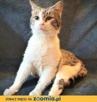 ROZALKA - półtoraroczna urocza koteczka pilnie szuka domu