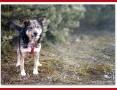 11 kg,wesoły,towarzyski,przyjacielski,szczepiony psiak KUBA_Adopcja_