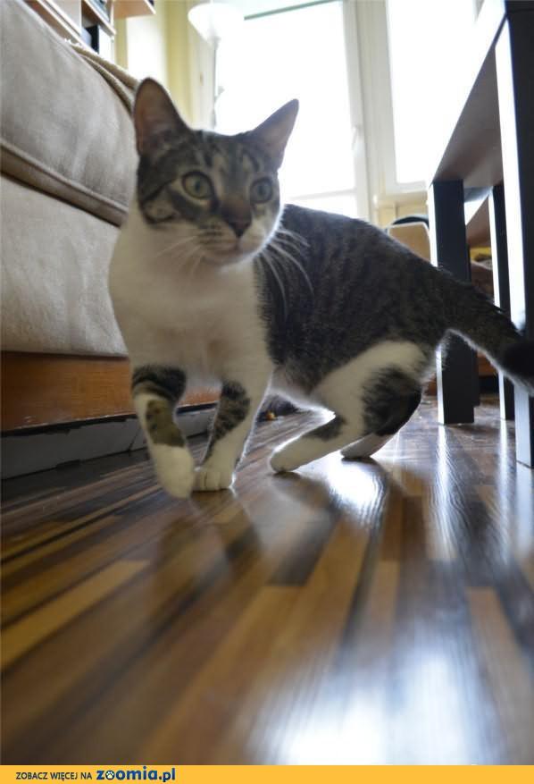 Szukamy kotki Lucy! Jeśli zauważysz - dźwoń!