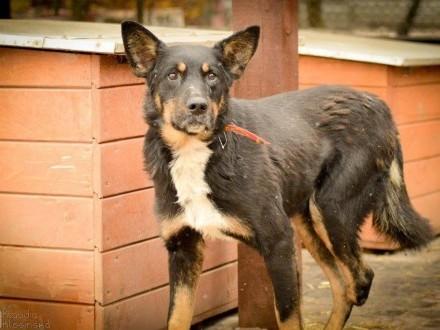 Siódmy, nieśmiały, niekonfliktowy psiak szuka domu!