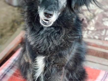 Dobry - niewielki  radosny i pełen życia pies szuka domu!