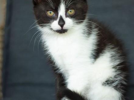 Polly z Fundacji Miasto Kotów   łódzkie Tomaszów Mazowiecki
