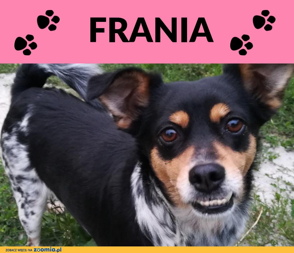 Frania-drobna,2latka,bardzo ufna i kontaktowa,
