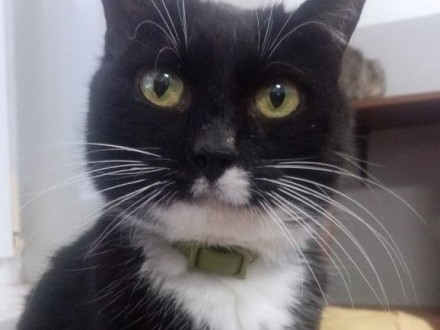 Fiona – koteczka porzucona przez opiekunów