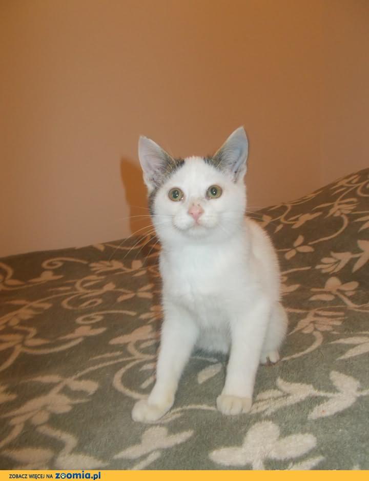 Słodki 3 miesięczny kociak do adopcji