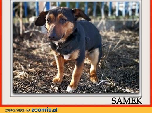 Mały 10 kg,łagodny,delikatny,nieśmiały,tulaśny,szczepiony psiak SAMEK.Adopcja.,  dolnośląskie Wrocław