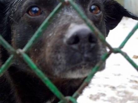 Pascal liczy na Twoją pomoc Bardzo smutny i zrezygnowany psiak   łódzkie Łódź