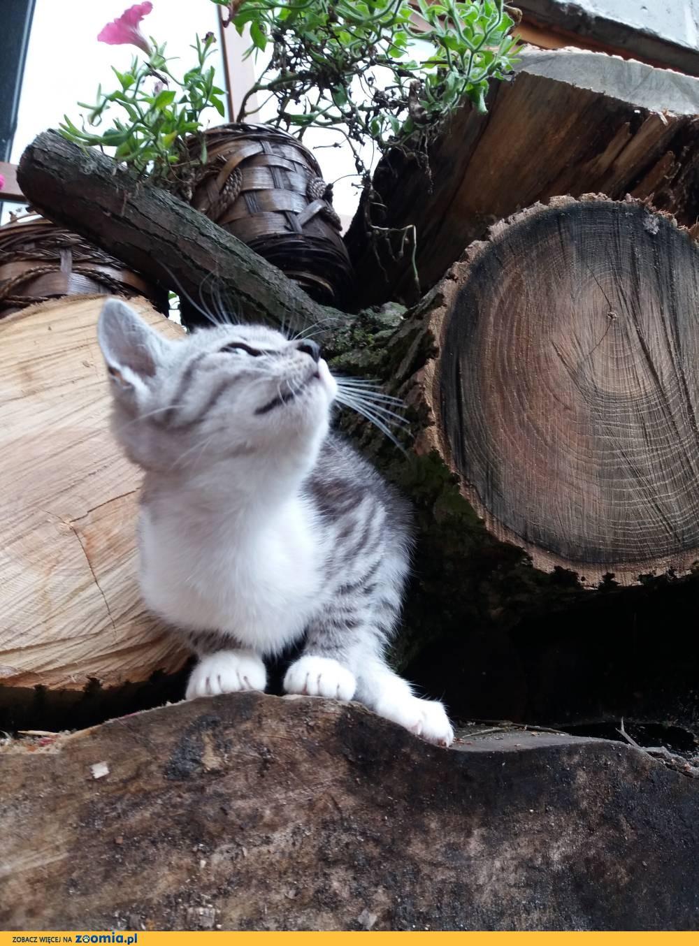 Koteczka Bella szuka domu