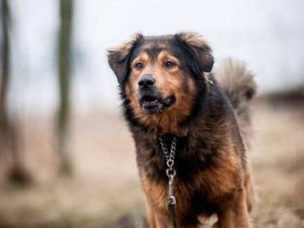 BROOKLYN - najcudowniejszy na świecie pies!    lubelskie Lublin