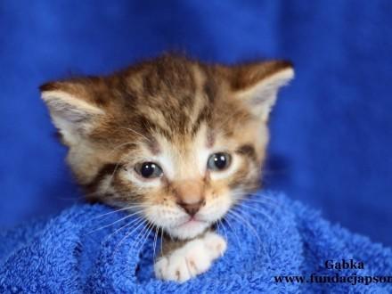 Gąbka - kochana koteczka