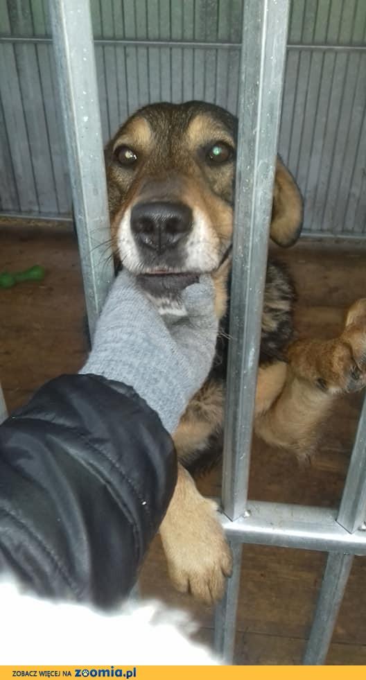 Barry, pozytywny psiak, przyjazny i młody - pokochaj i adoptuj!