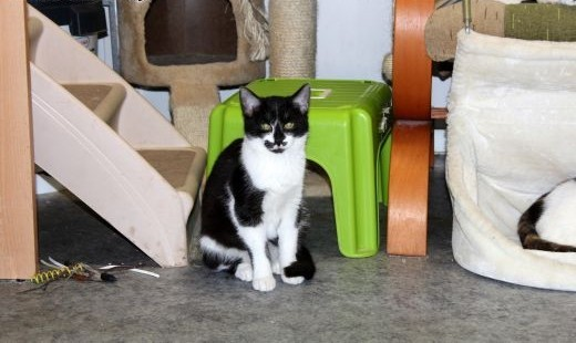 Piękna lecz bardzo nieufna koteczka Rusia szuka domku   dolnośląskie Głogów