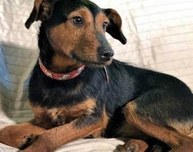 ATOS – 1 5-roczny  wrażliwy psiak w typie terriera szuka domu!