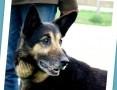 URAN przekochany pies senior,spokojny,przyjazny_Adopcja_