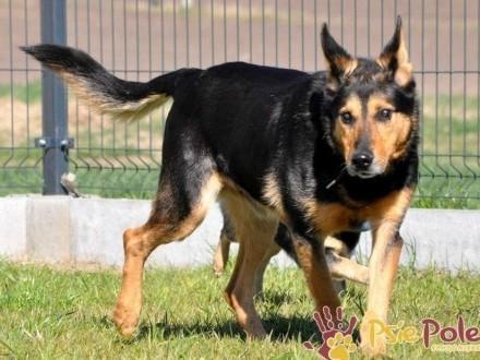 ADMIRAŁ-piękny  wspaniały psiak-nikt go nie chce  bo jest niewidomy  adopcja