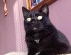Gucio, grzeczny, słodki KOCUREK szuka domu!,  Koty pospolite cała Polska