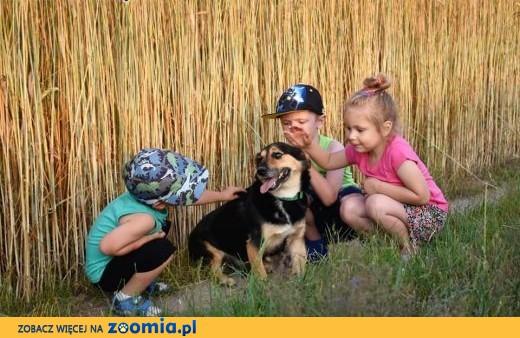FUKS wspaniały psiak kochający ludzi dzieci i świat szuka dobrego domku,  Kundelki cała Polska