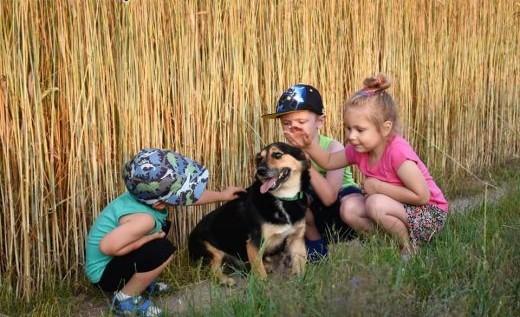 FUKS wspaniały psiak kochający ludzi dzieci i świat szuka dobrego domku   Kundelki cała Polska