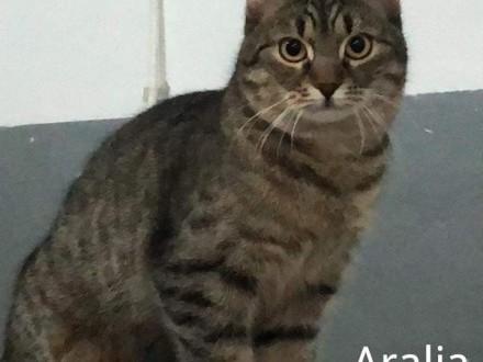 Sympatyczna  kotka szuka domu najlepiej z innymi kotami