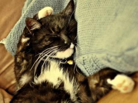 Zaginął czarny kot z białą krawatką
