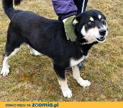 RAFI - kochany, wpatrzony w człowieka psiak błaga o dom!,  mazowieckie Warszawa