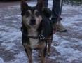 Reksio szuka domu! Pies, który potrafi przechodzić na pasach :)