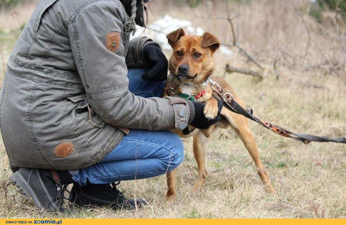 Rico-przyjacielski,młodziutki,nieduży psiak ,  lubelskie Lublin