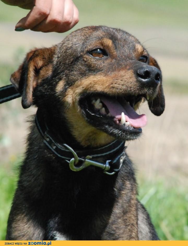 Rudi - młody, energiczny, przyjazny i towarzyski pies, adopcja