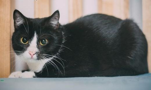 KOLENDRA ; KMINEK ;#8211; roczne uratowane  niekłopotliwe kotki    śląskie Katowice
