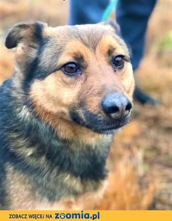 MISIEK - fajny, 5 letni psiak uratowany z łańcucha do adopcji,  mazowieckie Warszawa