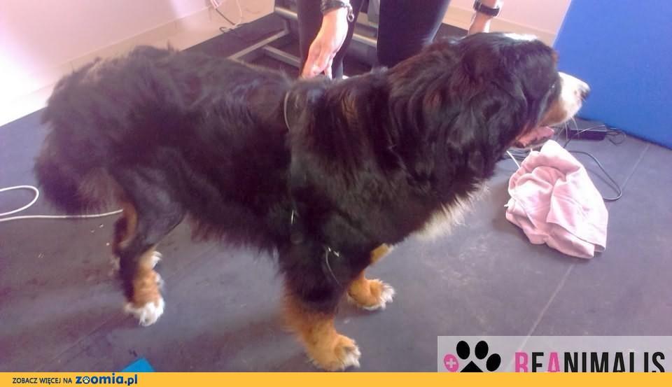 Reanimalis - Rehabilitacja psów i kotów, hydroterapia