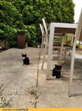 Pierwsze koty za płoty - czyli jak zostać właścicielem małej, puchatej kulki