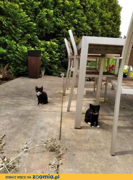 Pierwsze koty za płoty - czyli jak zostać właścicielem małej  puchatej kulki