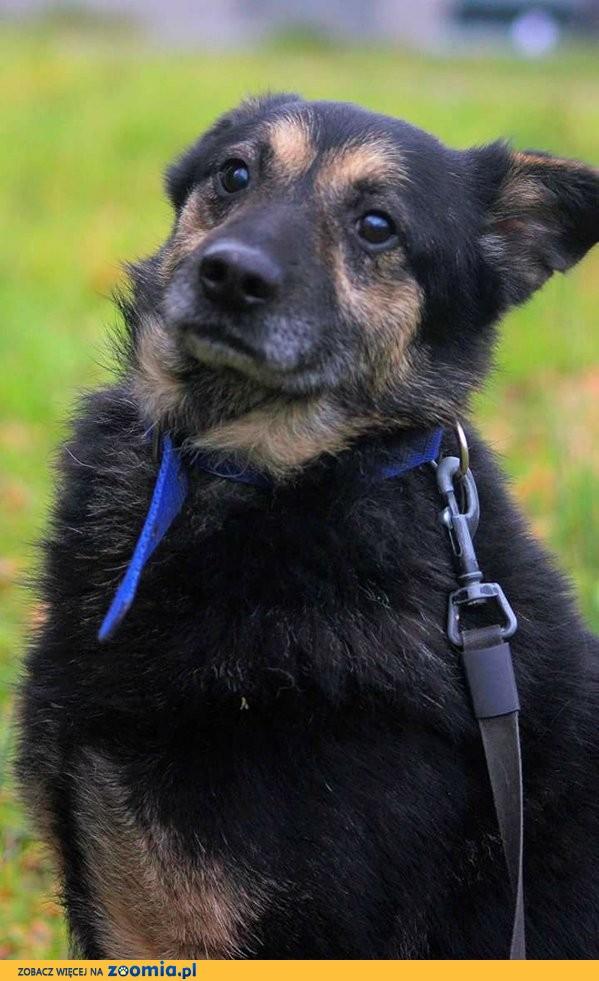 Parys, wpatrzony w opiekuna psiak szuka domu