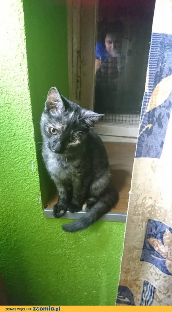 Koteczka Inzez szuka domu