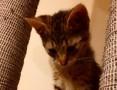 Mała kotka Mona szuka domu