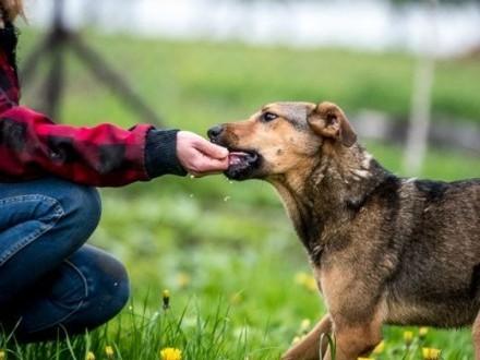 Bo LIMONKA  panna psia  moc radości Tobie da!   lubelskie Lublin