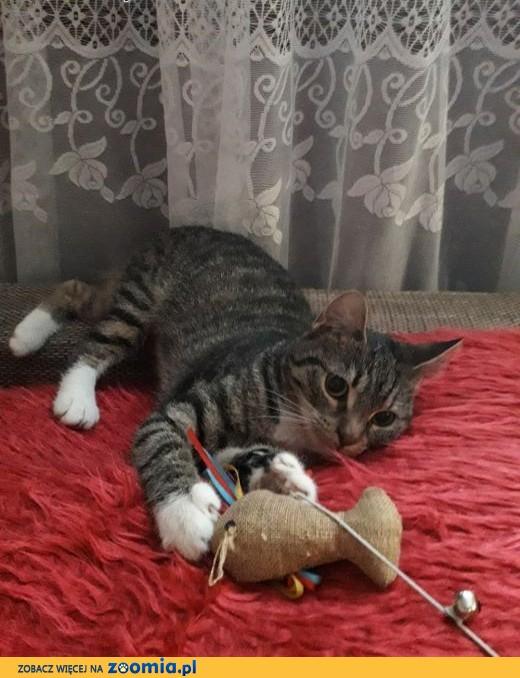 9 miesięczna, wysterylizowana kotka Szarusia szuka domu,  łódzkie Łódź