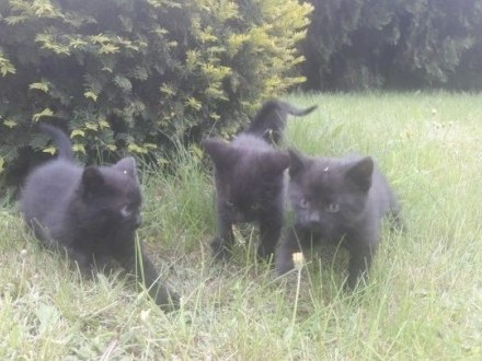 Rezolutne kocięta szukają domku