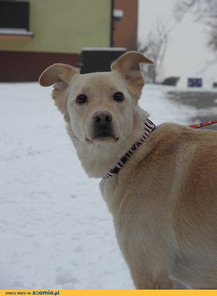 Dżeki, domowy, przyjazny, grzeczny - adoptuj super psa!