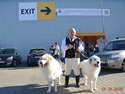 Szczeniaki Pirenejski Pies Górski