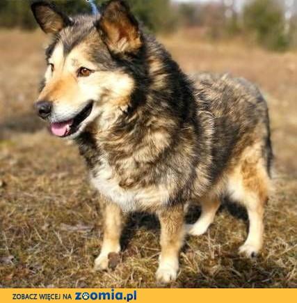 MOLIER - kochany, zagubiony psiak, od kilku lat marnuje się za kratami...,  łódzkie Łódź