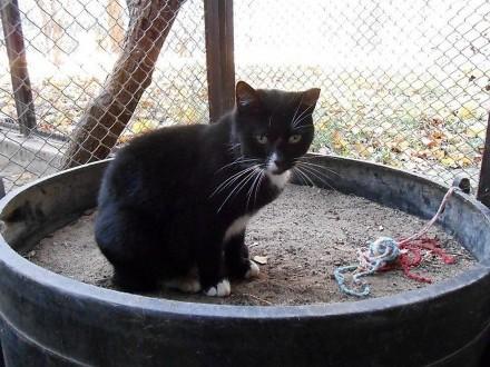 Janka - kotka z łezką w oku,  warmińsko-mazurskie Olsztyn