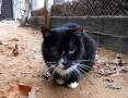 'Janka - kotka z łezką w oku,  warmińsko-mazurskie Olsztyn