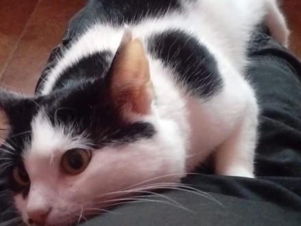 KOT: 2 5-roczny Cosiek z Fundacji Miasto Kotów - przeszedł swoje w życiu  czy ktoś go pokocha?