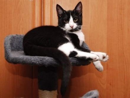 Jenny śliczna 8-mczna  koteczka szuka kochającego domu!   wielkopolskie Poznań