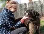 Wspaniała przyjaciółka Londi szuka swojego domu,  śląskie Gliwice