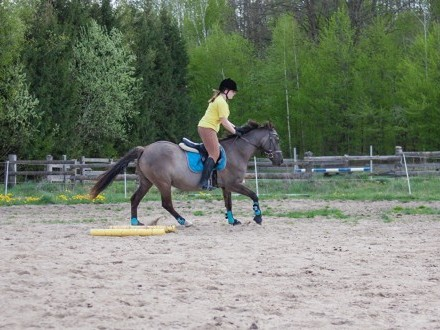 Super grzeczna klacz - świetny koń rodzinny/dla dziecka