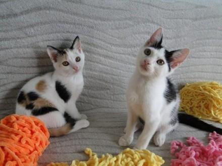 Podwójne szczęście: Elliot i Porzeczka  cudowny koci dwupak!