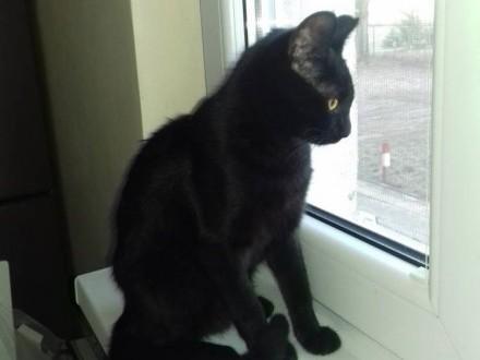 Koteczka Majka szuka domu